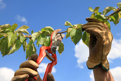 jardinage à domicile dans le val d'oise 95, jardiniers à domicile